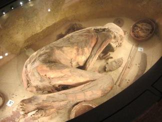 -_01_Museo_Egizio_Torino_-_Fossile_umano_2