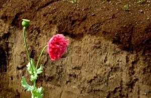 fiore-strano