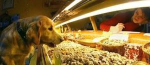 negozio-cani